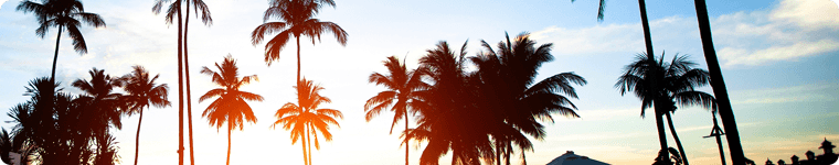 sunset_palmtrees